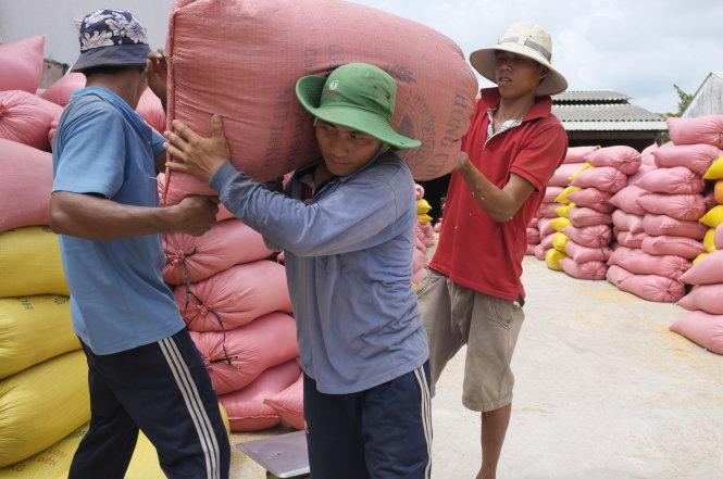 Rộng cửa cho xuất khẩu gạo